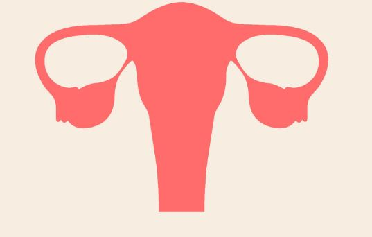 What is the normal size of uterus