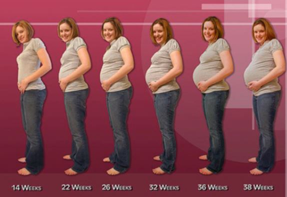 belly sizes